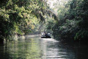 Picture of a boat floating down the river, jungle teeming with life on either side