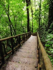 Picture of a wooden staircase descending into a bright green, forested bit of the jungle