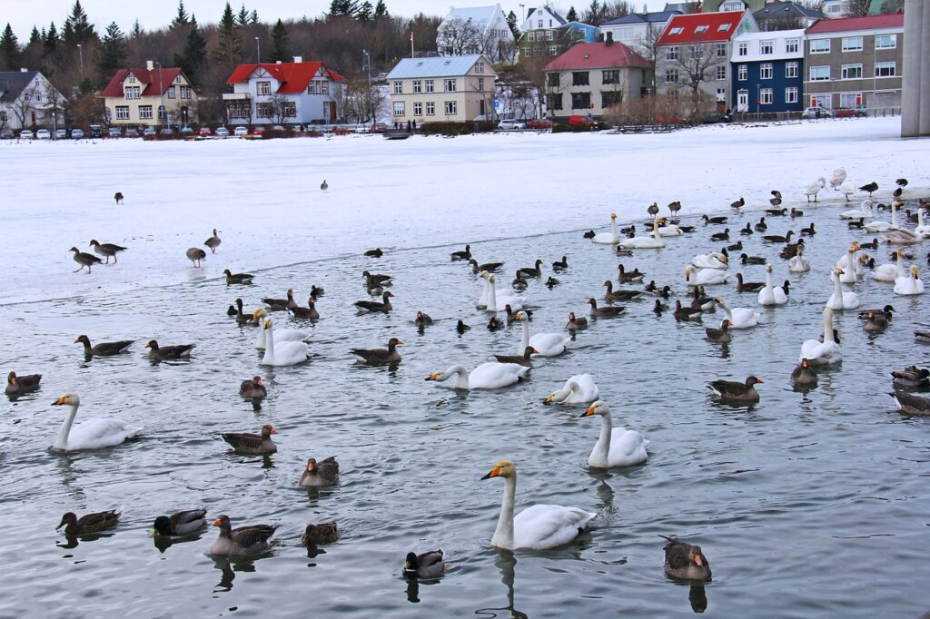 Lovely pond full of ducks, geese, and swans