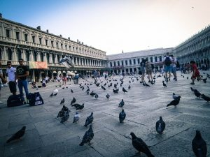 Picture of the Piazza San Marco square in Venice Italy