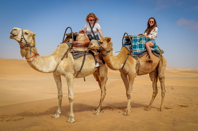 Picture of camels and riders in the Sahara desert in Africa