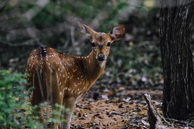 Picture of a deer in the forest