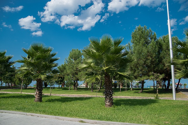 Picture of palm trees against a bright blue sky