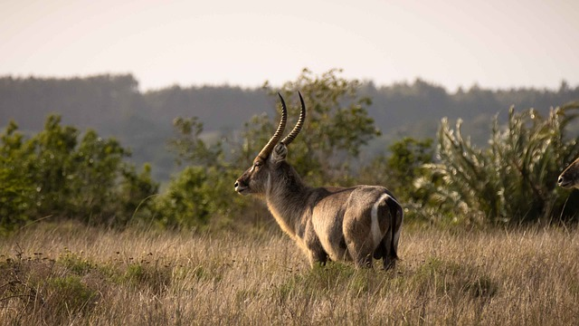Picture of iSimangaliso Wetland Park South Africa