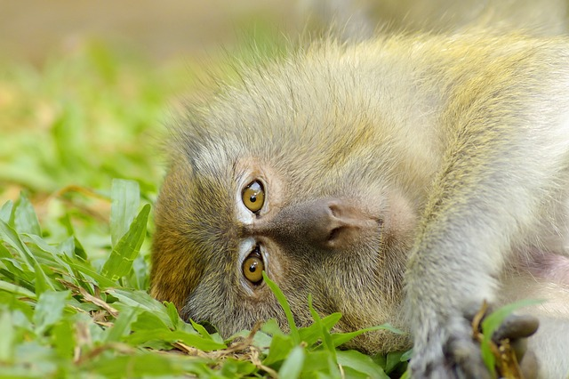 Picture of a cute monkey