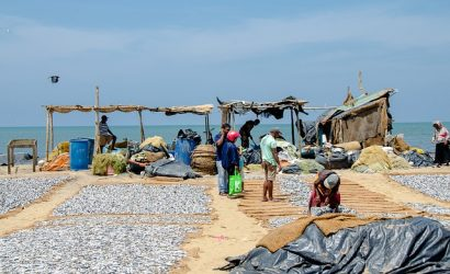 Picture of the fish market drying fish in the sun at Negombo Sri Lanka