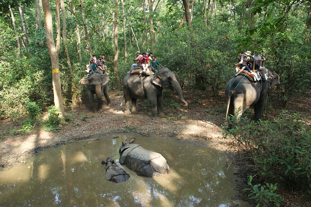 Picture of rhinos and elephants in Chitwan National Park