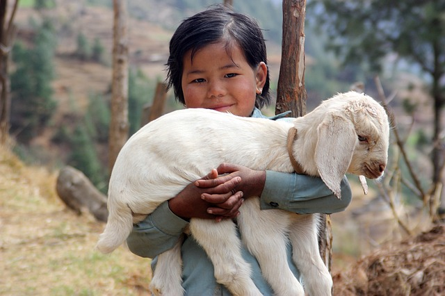 Picture of a beautiful little girl holding a lamb tightly with a big bright smile