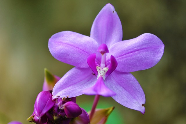 Picture of a beautiful purple orchid